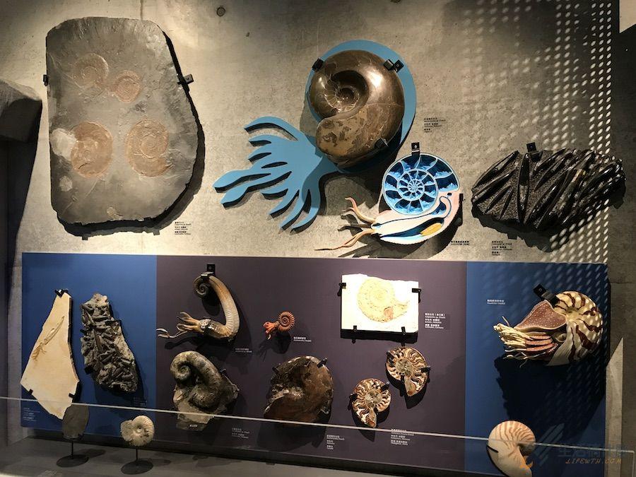 台南親子景點:臺南左鎮化石園區|以恐龍化石為主題的博物館